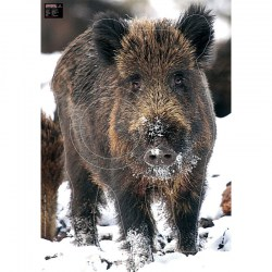 MAXIMAL ANIMAL FACE WILD BOAR IN SNOW
