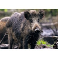 MAXIMAL ANIMAL FACE WILD BOAR