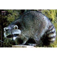 MAXIMAL ANIMAL FACE RACCOON